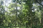 ar-plantation-under-purulia-fda