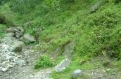 well-grown-fda-plantation-with-ground-vegetation-in-sikkim-ei